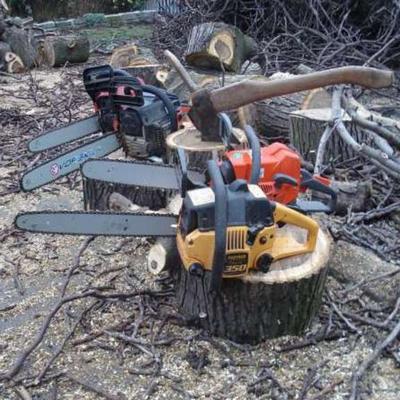 услуги по валке деревьев