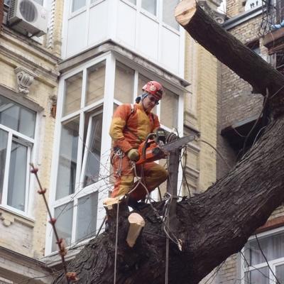 санитарная обрезка деревьев в городе