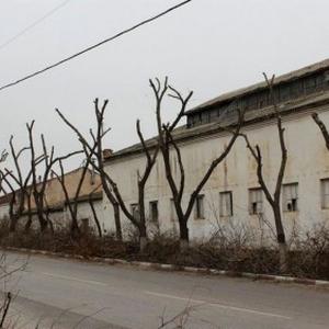 Санитарная обрезка деревьев в Москве
