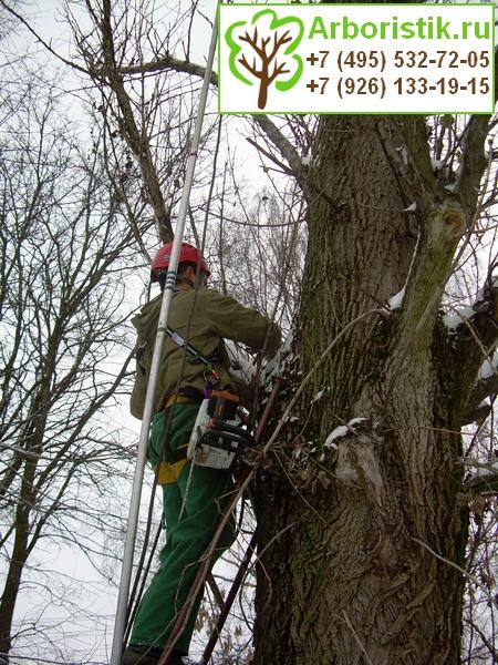кронирование деревьев цена