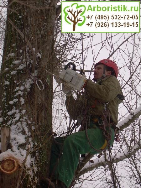 кронирование деревьев альпинистами