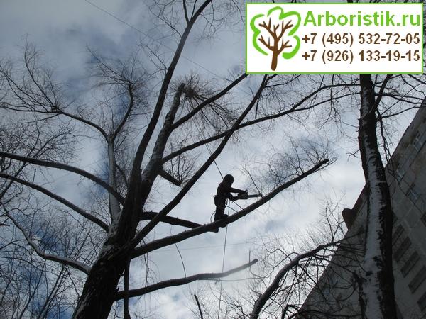 санитарная обрезка сухих веток деревьев