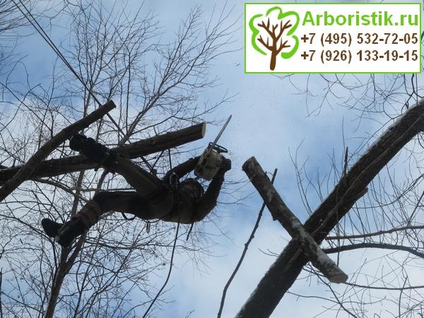 санитарная обрезка деревьев арбористами