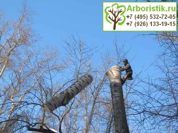 Санитарная обрезка деревьев в Москве и Московской области