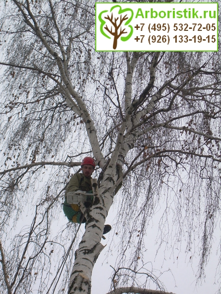 кронирование деревьев в Москве и Подмосковье