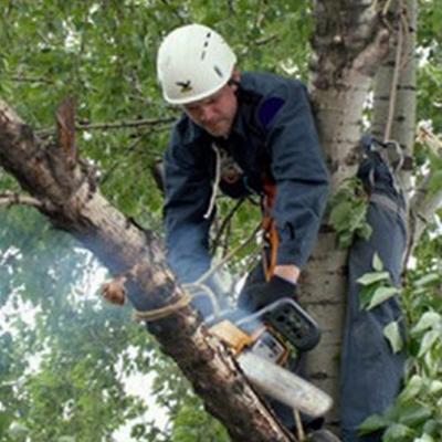 валка деревьев цена