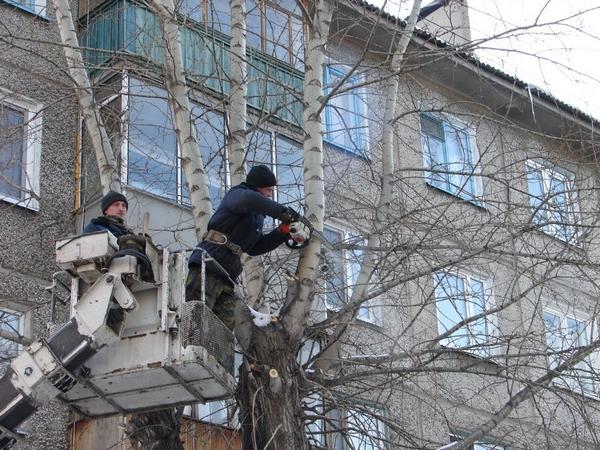 валка деревьев в городе