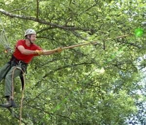 instrumenty-arborista
