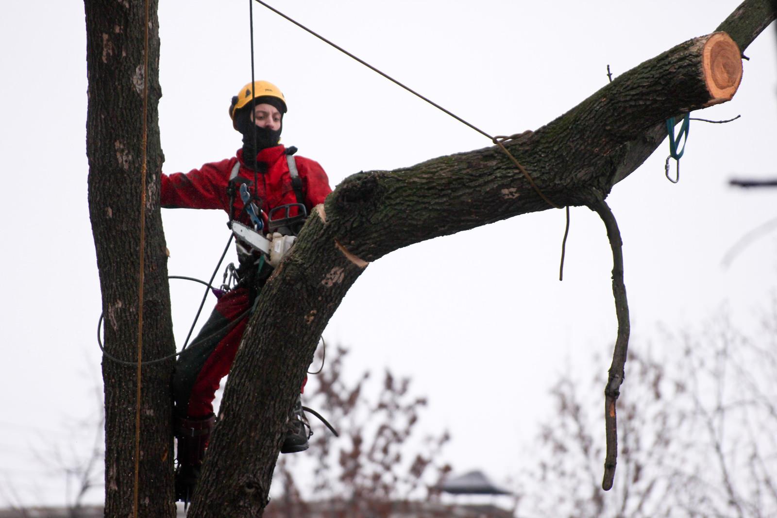 работы по удалению деревьев