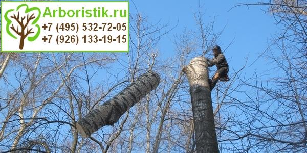 услуги арбористов в Москве