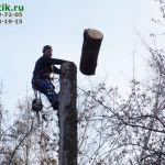 udalit-derevo-detskiy-sad1
