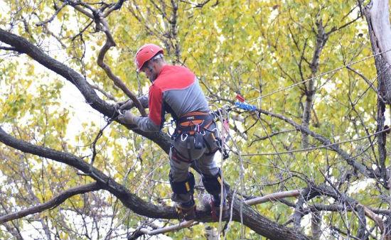 спиливание деревьев во дворах