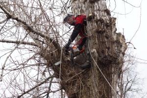 кронирование деревьев в москве