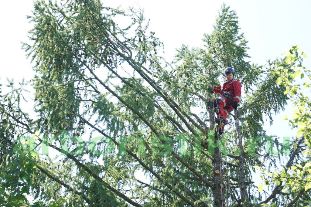 Обрезка крон деревьев в московской области
