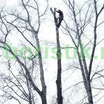 работа альпиниста при удалении дерева