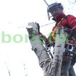 удаление сухих деревьев альпинистами