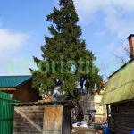 Удаление ёлки в Нарофоминском районе московской области