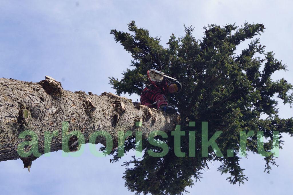 Удаление ёлки в Наро-Фоминском районе Московской области