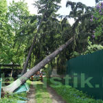 удаление упавших деревьев в Одинцовском районев