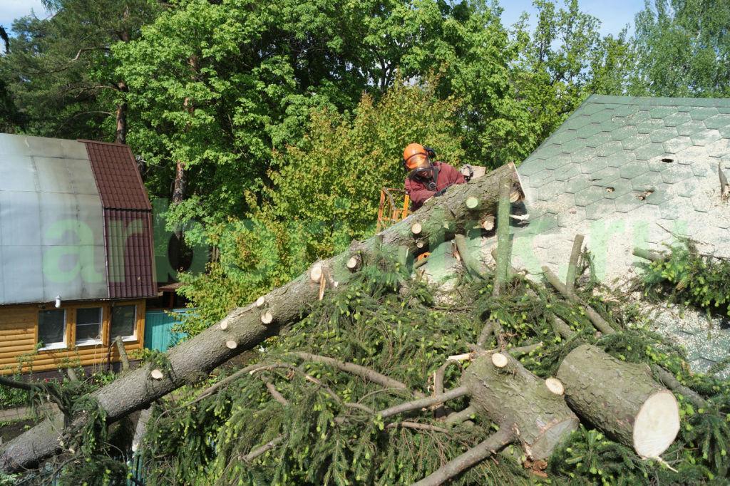 Опиловка аварийных деревьев