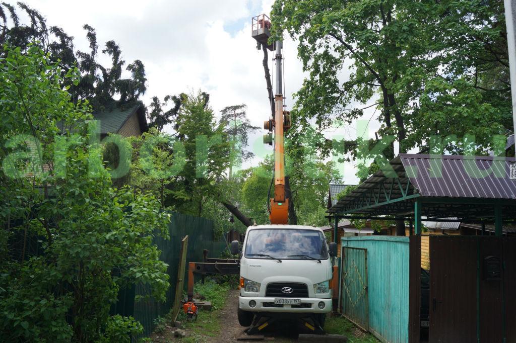 Вырубка деревьев в городе