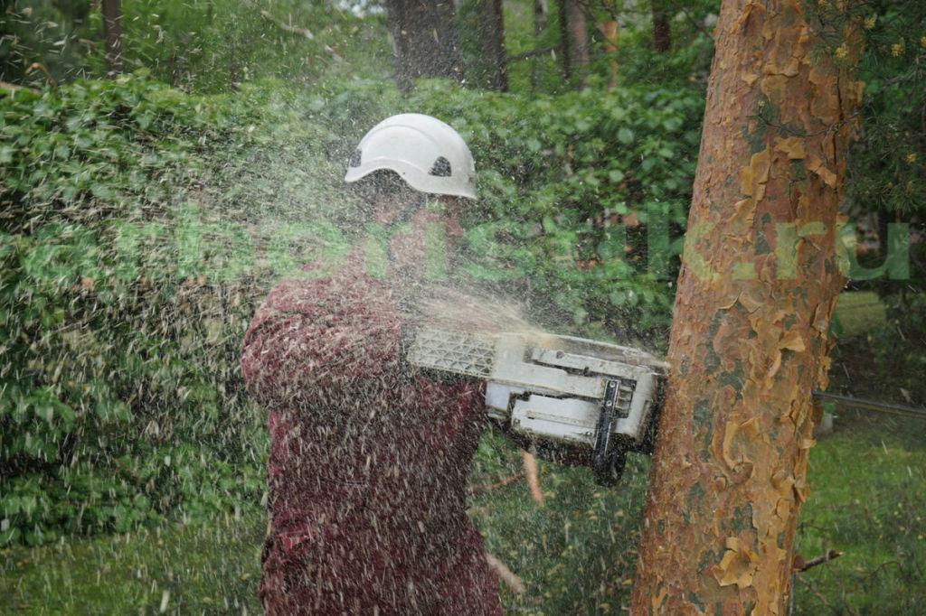 Удаление сосен после урагана в поселке Николина Гора