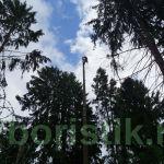 udalenie-dereviev-shodnenskiy-rayon-golikovo-12