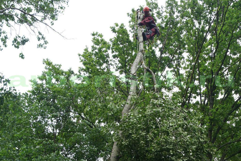 Удаление деревьев в сходненском районе Московской области