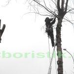 Глубокая обрезка деревьев на территории автостоянки