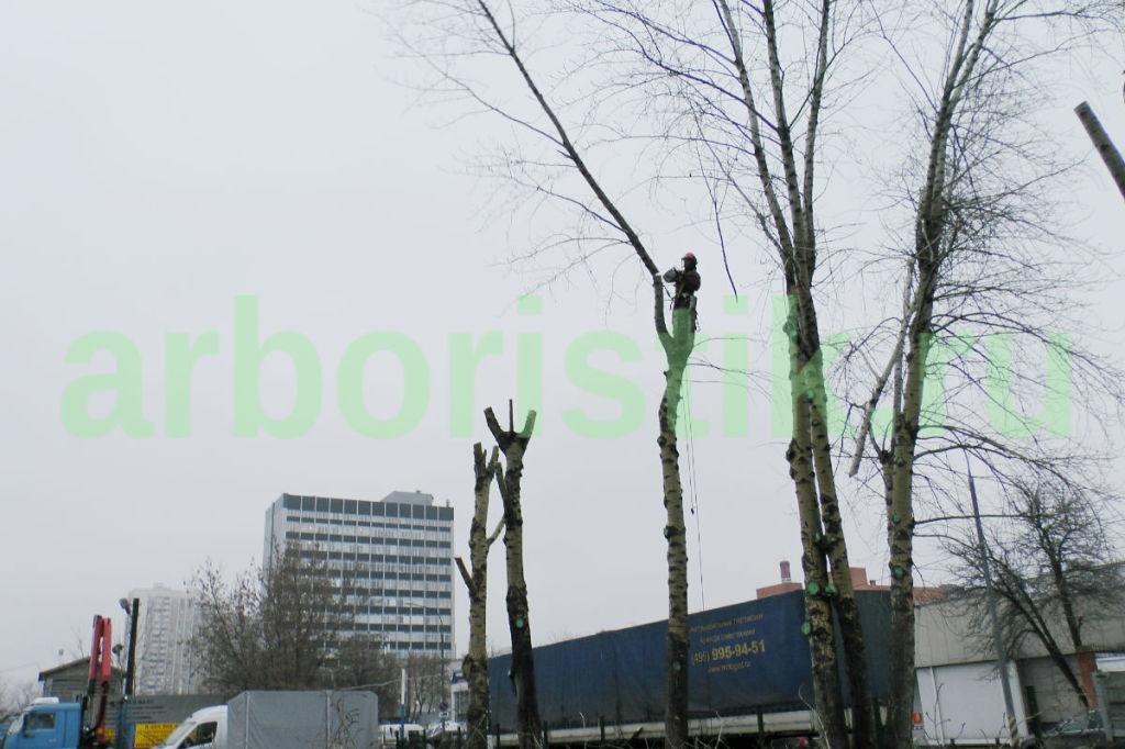 глубокая обрезка деревьев в Москве