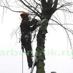 Глубокакя обрезка деревьев на территории автостоянки в Москве